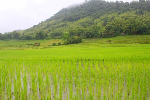 1642 Fields near Kuang Si.jpg