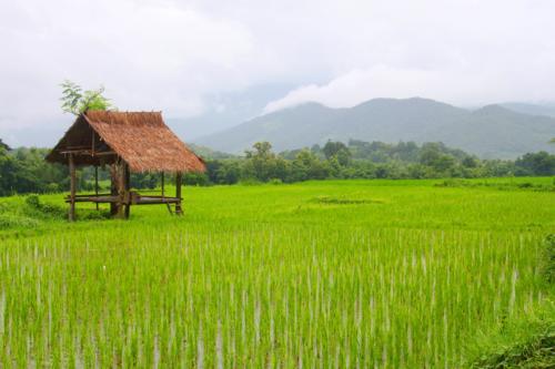 1647 Farmland near Kuang Si.jpg