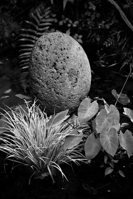 A Quiet Garden