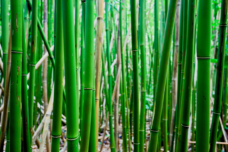 Bamboo RD-605