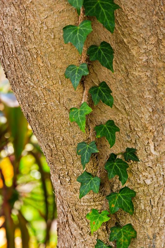 vine and tree 09139