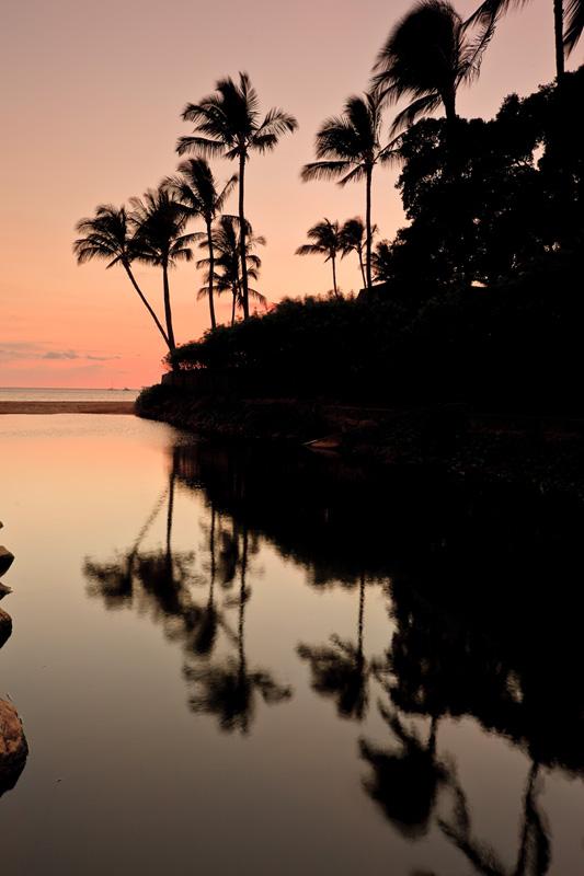 reflecting palms 31575