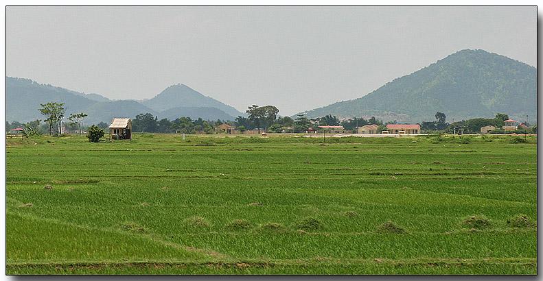 Rice paddies, Hanoi