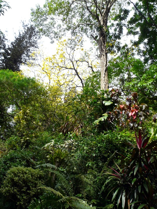 Lots Of Interesting Flora & Fauna