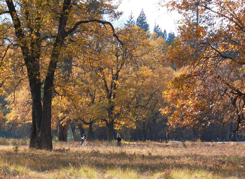 Meadow stroll