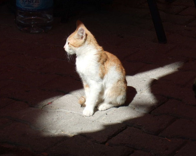 Goreme:  This kitten found a sunbeam to warm up in among the tables.