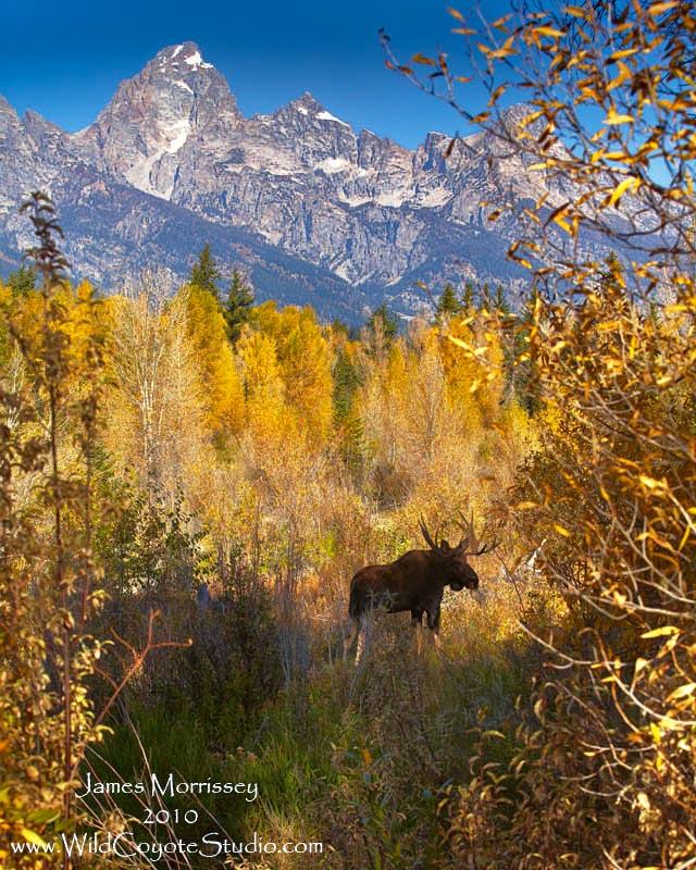 Moose and Mountains ADJ.jpg