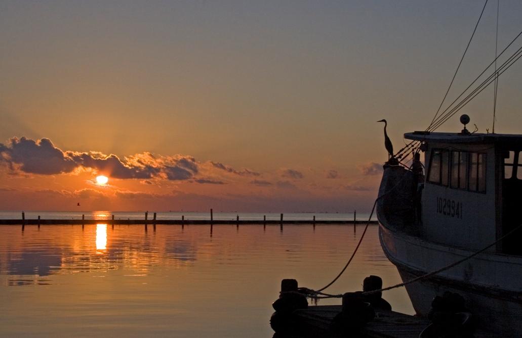 Heron Dawn:  Fulton Marina_Rockport