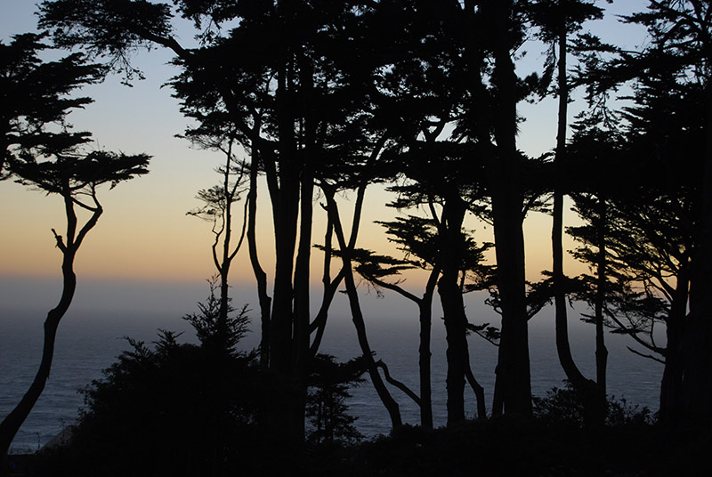 A last view through the Cypresses<br />0994.jpg