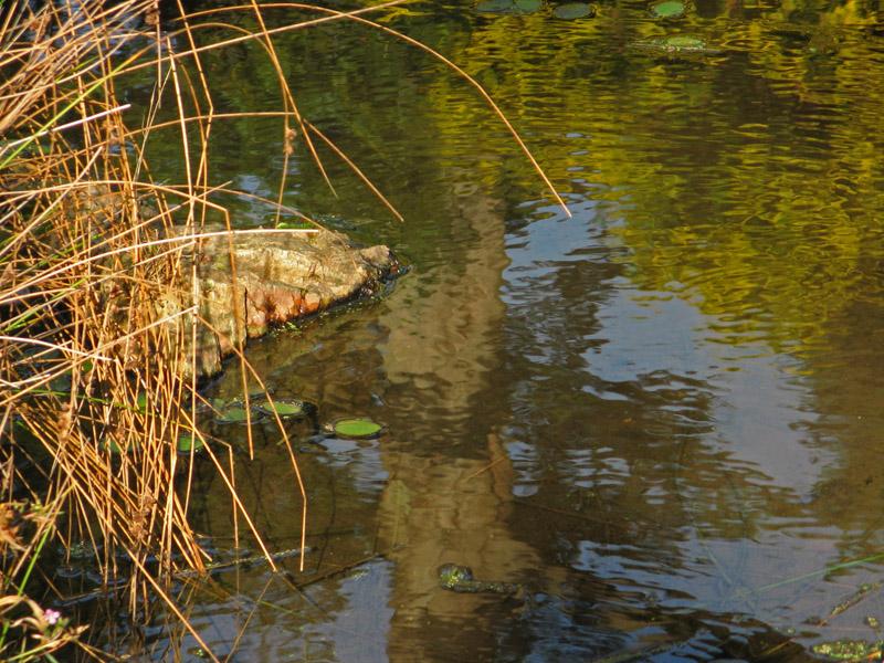 Pond I<br />4153