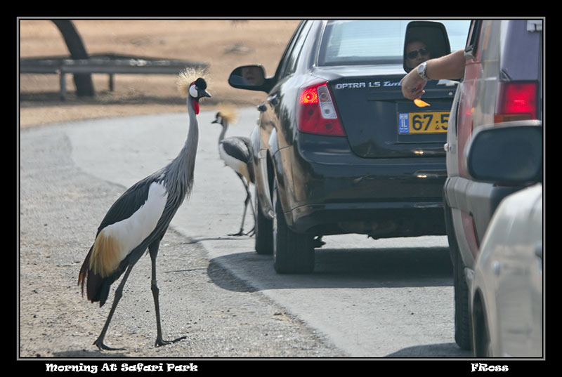 Morning at Safari Park.jpg