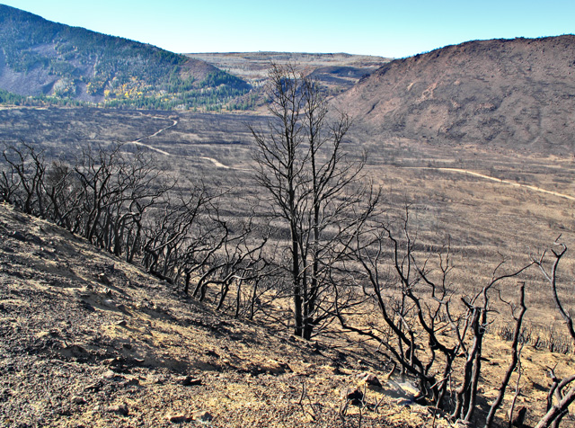 Burnt Trees on the Mountain Loop