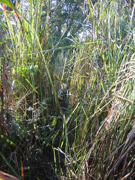3m tall grass, Chitwan National Park