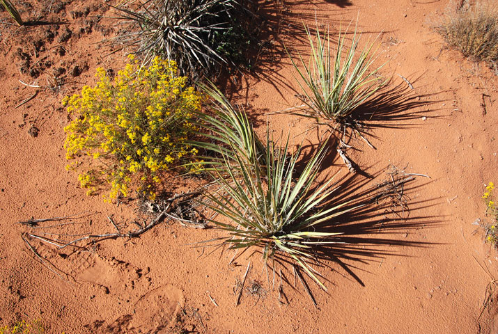 Yucca (spiky plants) and unknown