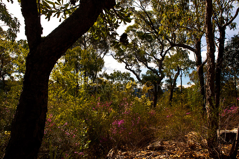 Bushland with wildflowers