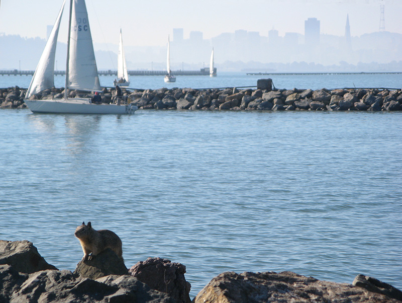 Mariner squirrel, San Francisco at his back - mImg_2547