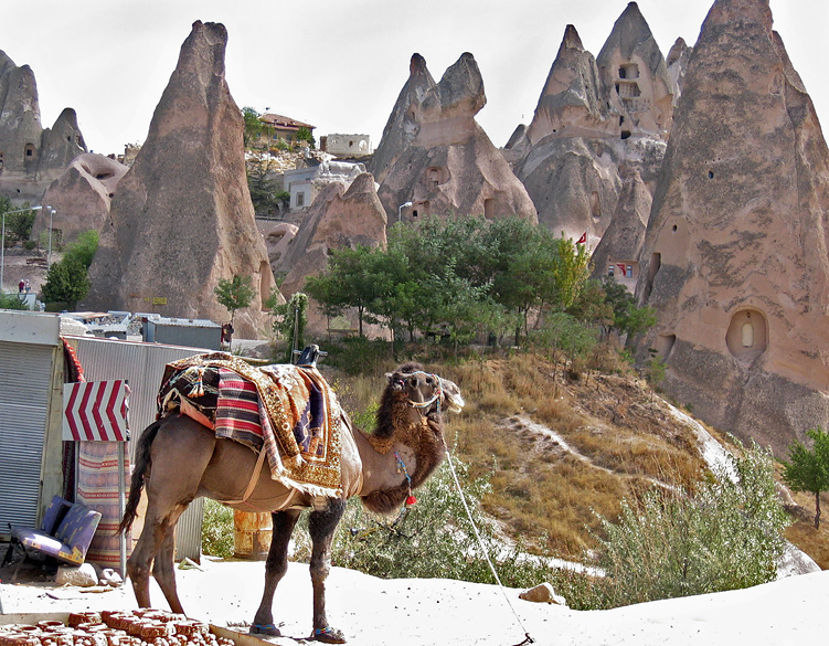 Cappadocia tourist camel - I took these from a nearby shop.