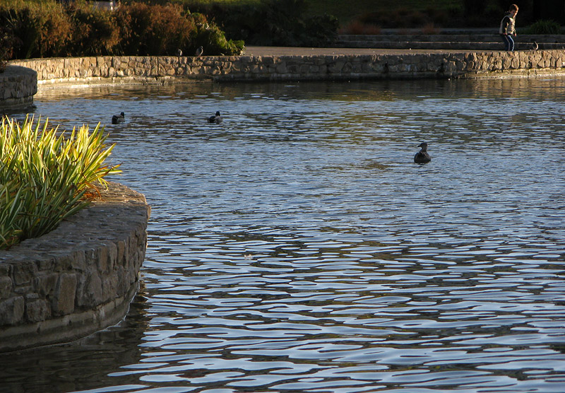 Dusk light on pond