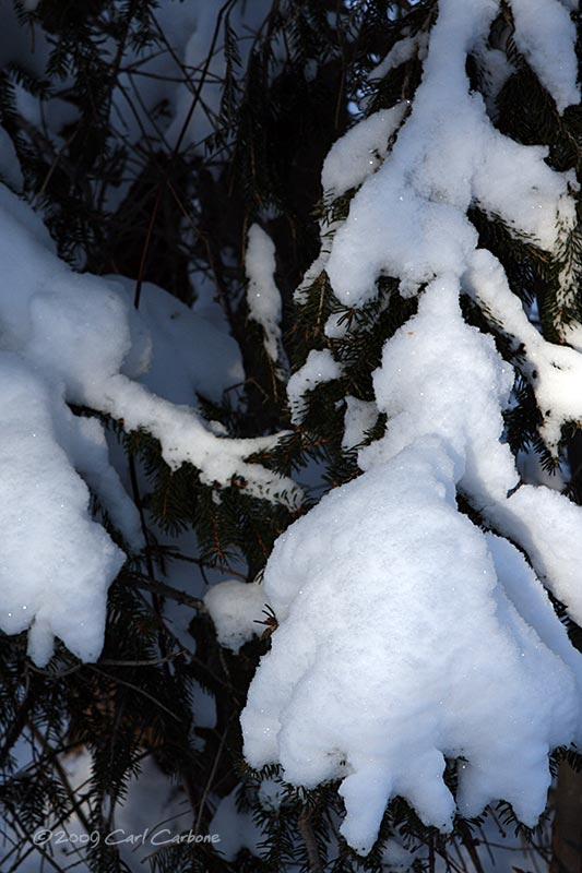 IMG_2888-snowy_branch.jpg