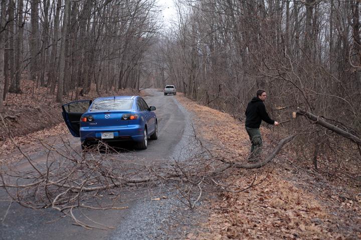 David Golok Tree Clearing.jpg