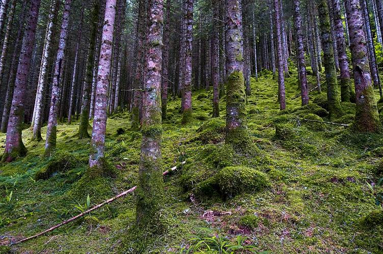 Glen Garry Forest