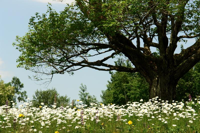 DSC05940flowertree.jpg