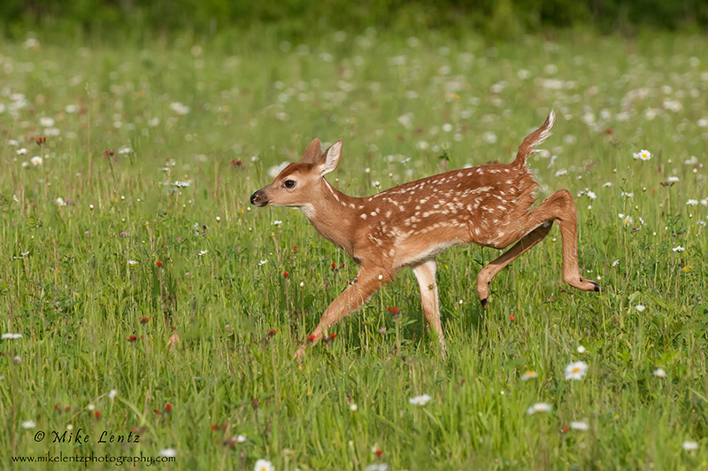 Bambi bursts in flowers