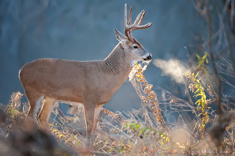 8 point buck backlit with steam