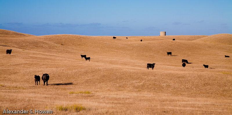 Dairy landscape