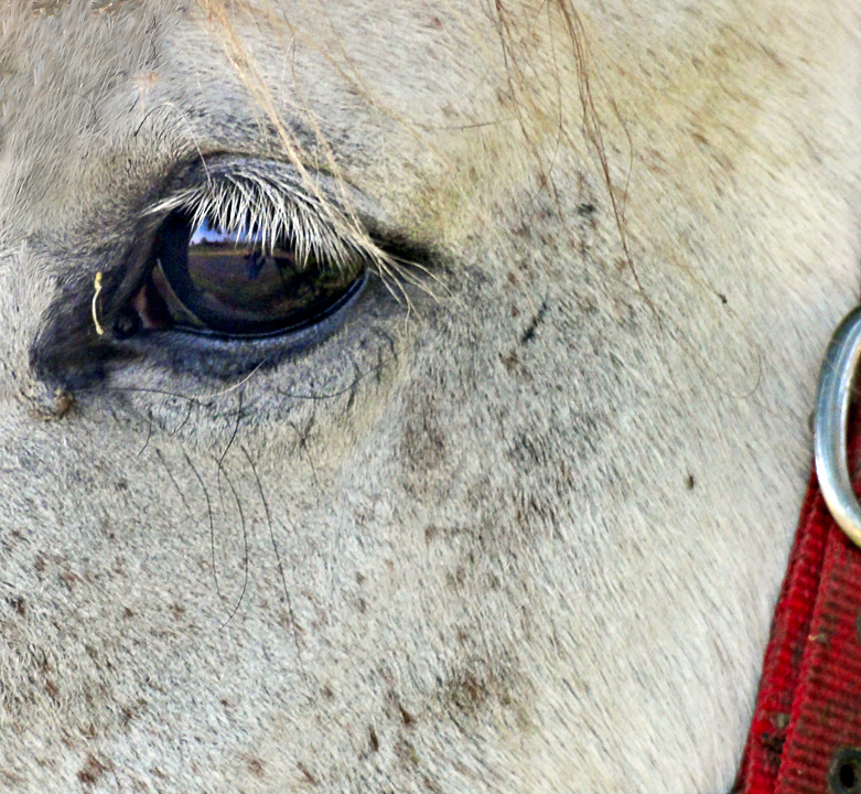 Reflections on an equine eye.