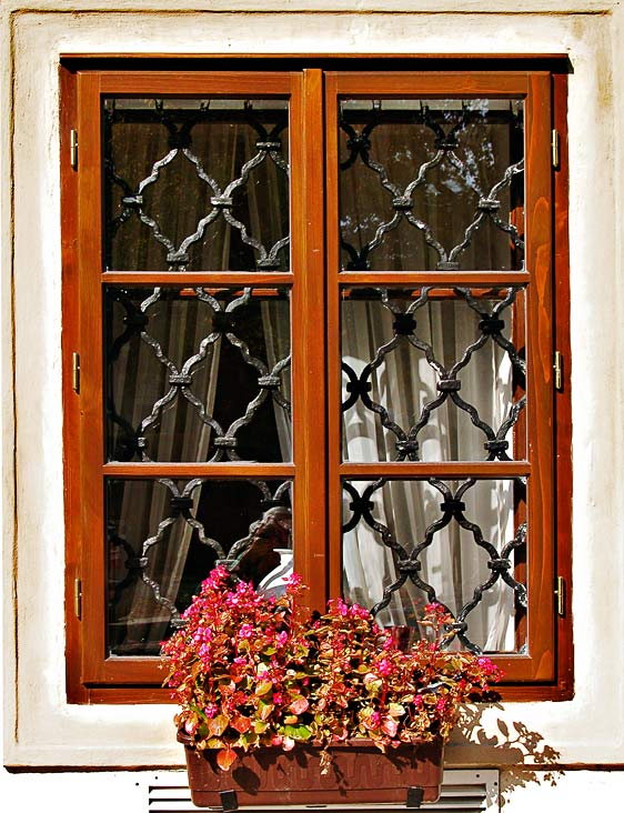 Window and flowers