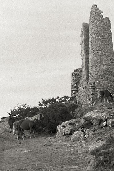 Jan 28: Ponies at Pearces