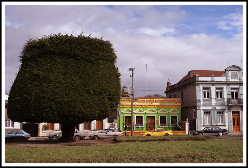 Patagonia: Strange Trees of Punta Arenas
