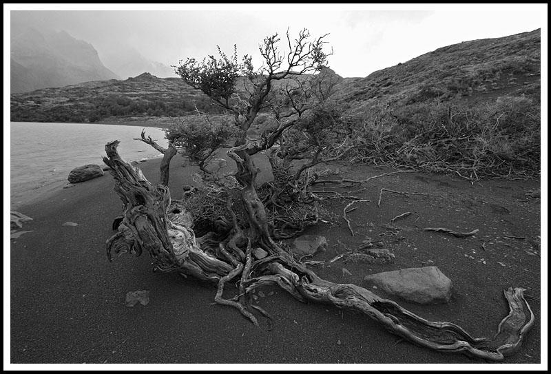 Patagonia: Stump and Mountains