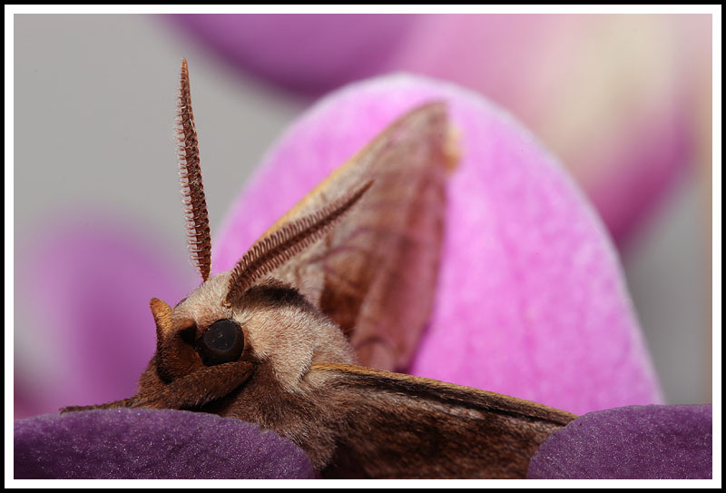 Moth and Orchid II