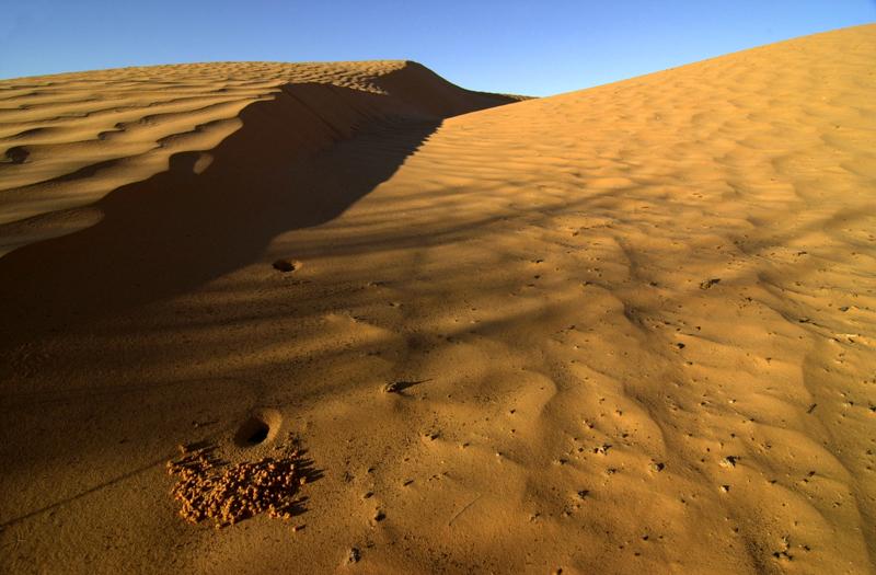 Dunes Ksar Ghilane 4