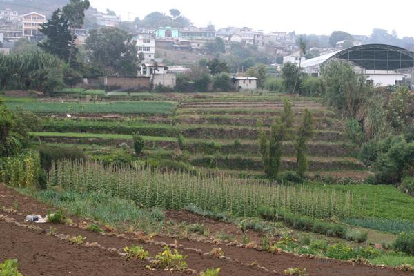 Siembras de Verdura en el Area Rural del Municipio
