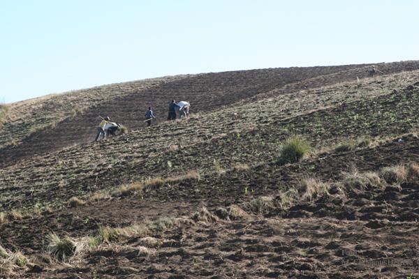Area de Cultivo Cercana a la Poblacion