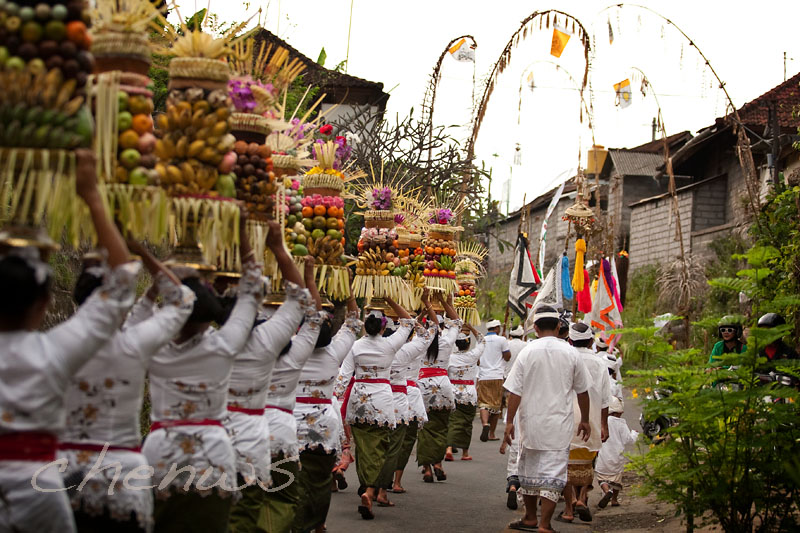 BALI, INDONESIA - JANUARY 14: Balinese ladies walk to the village temple with offering of fruits basket placed on their heads in