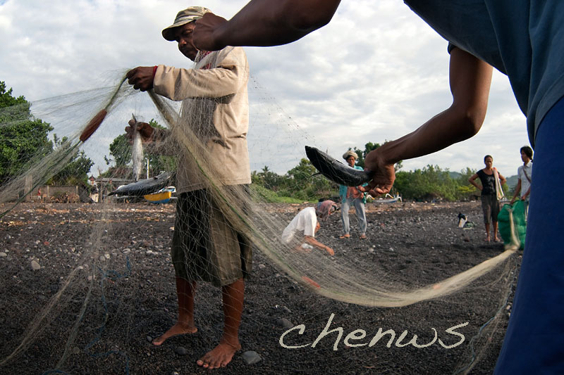 Removing fish from the nets _CWS7099.jpg