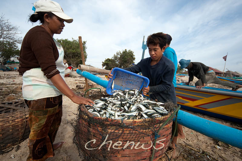 Bountiful catch at Jimbaran village _CWS7380.jpg