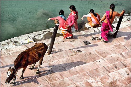 Cow & Women on the ghats