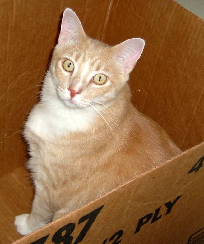Catso In a Box