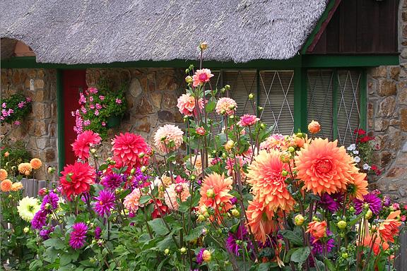 Cottage Flowers Photo