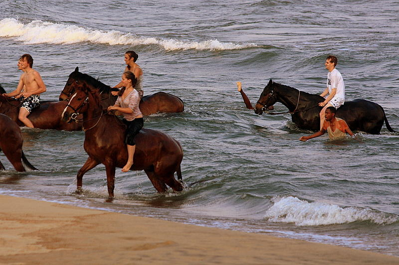 Horses in Lake Malawi