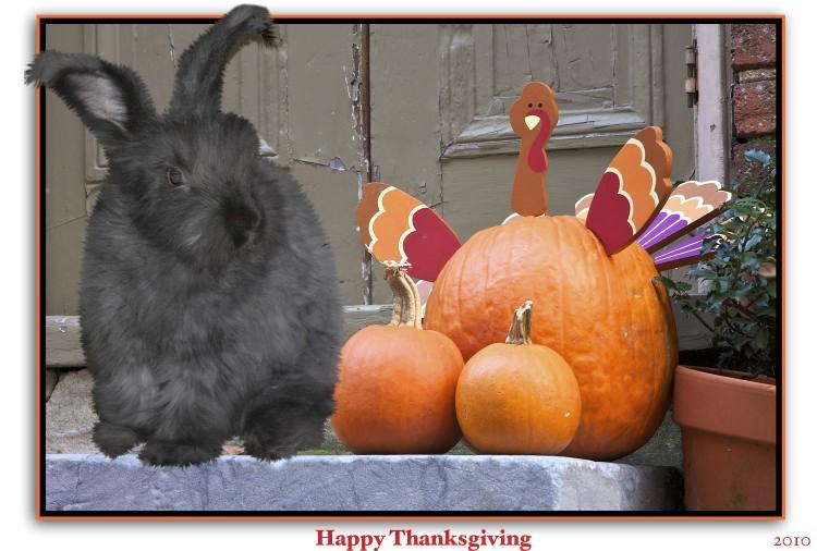 Eat turkey ~ not rabbit!!!