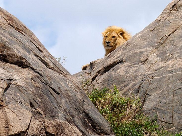 lone male in the rocks