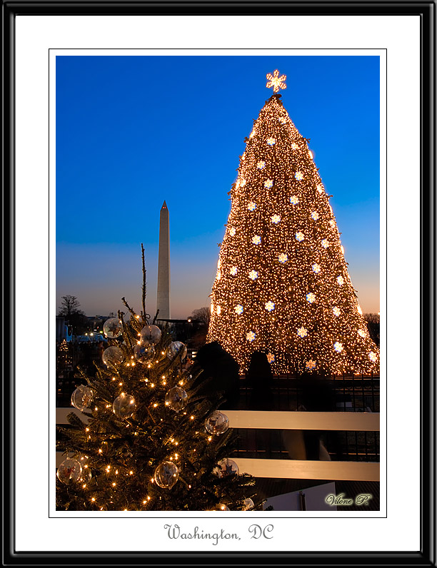 National Christmas tree in Washington, DC