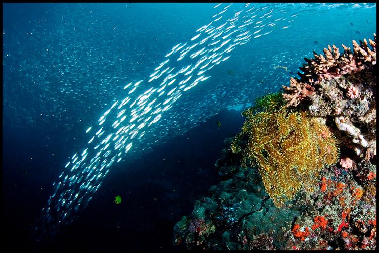 Pescador under the sardine run 2