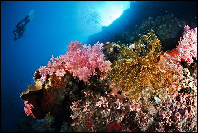 Pescador reefscape 3